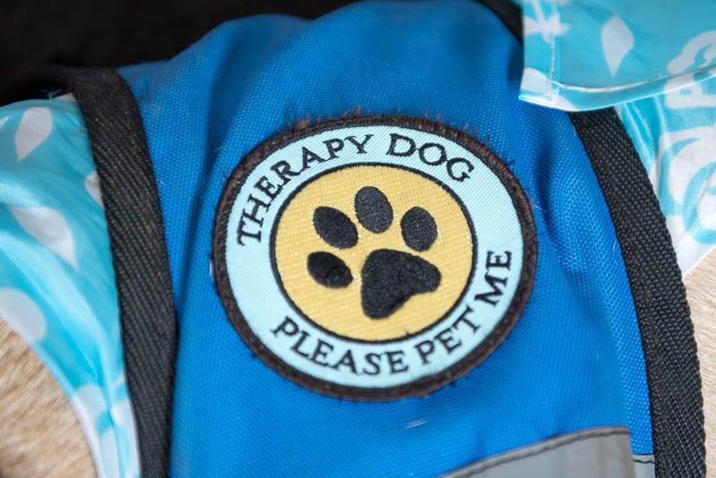Therapy Dog patch on blue dog vest