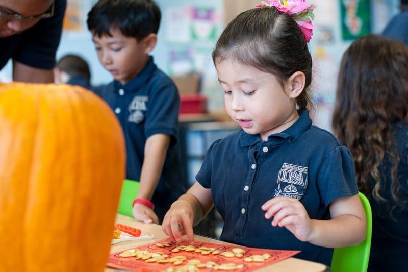 Kindergarten student counting pumpkin seeds