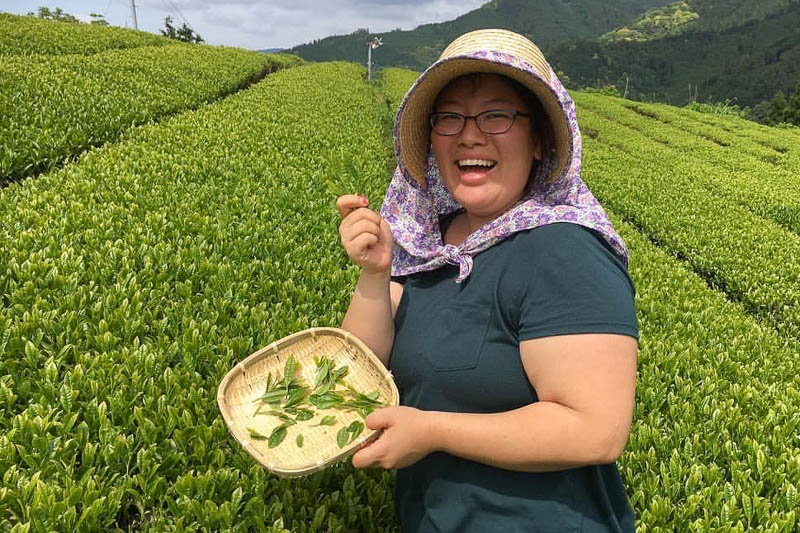 Kelsey picking yame-cha green tea in Fukuoka – one of the top quality teas in Japan!