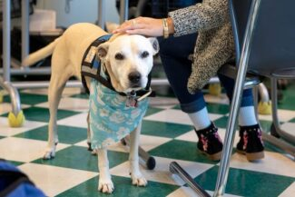 Therapy dog in classroom with students