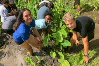 Students working in a taro patch